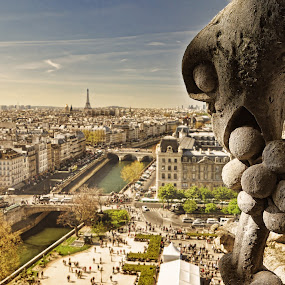 Birds eye view by Pranav Babu - Landscapes Travel ( france, bird eye view, notre dame paris )