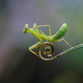 POSE by Nordin Seruyan - Animals Insects & Spiders