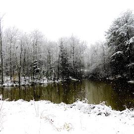Snowfall Over the Lake by Irina Kartashova - Landscapes Weather ( water, snowfall, wintwer, snow, trees, weather, lake,  )