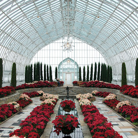 Como Park Conservatory Poinsettia Display by Susan Fries - Buildings & Architecture Public & Historical ( poinsettia, conservatory, como, nature, como park, flowers, flower display )