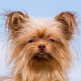 by Terry Watson - Animals - Dogs Portraits