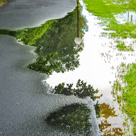 Walking Path on a Rainy Day by Del Candler - City,  Street & Park  City Parks ( water, walking path, reflection, asphalt, grass, green, white, lamp, trees, puddle, gray )