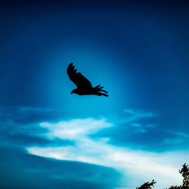 by Andrew Stevenson - Digital Art Animals ( digital photography, brids, bird, silhouette, skyscape )