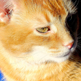 by Vince Scaglione - Animals - Cats Portraits