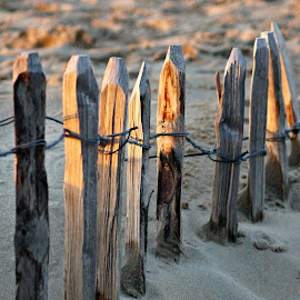 Beach fence by Anita Berghoef - Landscapes Beaches ( sand, fence, nature, sunset, nature up close, beach, light )