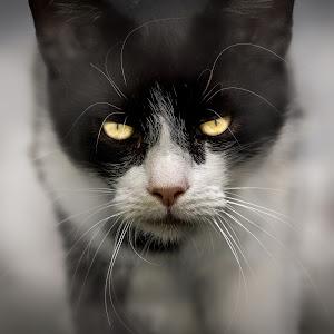 Sylvester (1 von 1).jpg