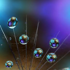 dream drops by Hale Yeşiloğlu - Abstract Macro ( macro, waterdrop, drop, liquid art, drops, abst, waterdrops )