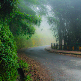 Foggy Fragrance by Subhajit Nath - Landscapes Weather ( clouds, bamboo, afternoon, fog, road )