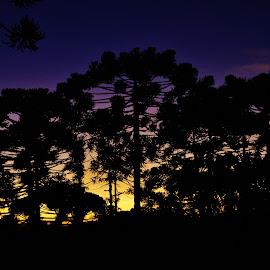 Campos do Jordão SP Brazil  by Marcello Toldi - Landscapes Sunsets & Sunrises