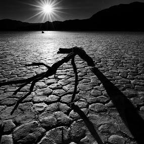 The Race Track by Cindy Garwood - Landscapes Deserts