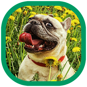 Cute dogs Wallpapers For PC (Windows & MAC)