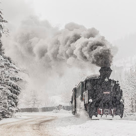 WInter story by Sveduneac Dorin Lucian - Transportation Trains ( winter, romania, travel, bucovina, trains )