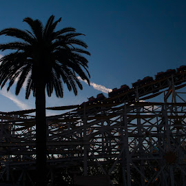 Duskoaster by John M. Larson - City,  Street & Park  Amusement Parks ( palm tree, california adventure, california, sunset, silhouette, coaster, theme park, roller coaster, cloud, disneyland, fun, dusk )