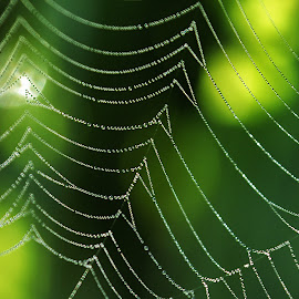 Dew Drops on a Spider Web by Twin Wranglers Baker - Nature Up Close Webs (  )