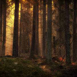 In the forest. by Allan Wallberg - Nature Up Close Trees & Bushes ( sweden, nature, wood, forest, light,  )