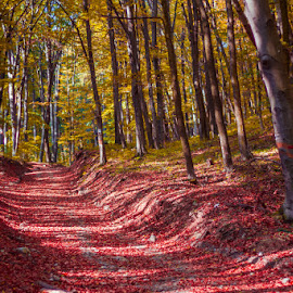 by Exo Kareas - Landscapes Forests ( red, hicking, wood, autumn, fall, forest, yellow, road, leaves, karpaty )