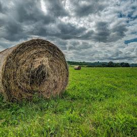 by Siniša Biljan - Landscapes Prairies, Meadows & Fields