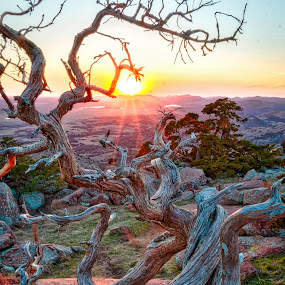 Twisted Oak Sunset by Kathy Suttles - Nature Up Close Trees & Bushes ( suttleimpressions, thru the tree, oklahoma, sunset, sunset view, twisted oak, mt scott, not broken, bent,  )