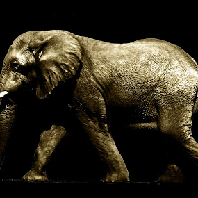Elephant by Chelsea Vermaak - Animals Other Mammals ( african, elephant, large mammal )