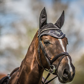A Good Friend by Eva Lechner - Animals Horses ( horse, portrait, close-up, friend,  )