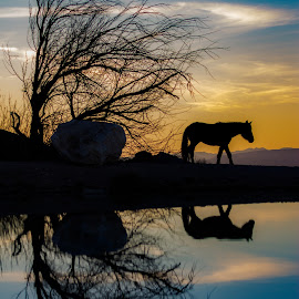cold creek  by Shane R Fairburn - Animals Horses ( horses, silhouette, sunset, nevada, wild horses )