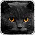 Black Cat Pack 2 Wallpaper APK for Ubuntu