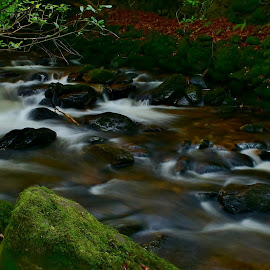In the woods by Nik Hall - Landscapes Forests ( stream, ireland, killarney, forest floor, long exposure, forest, river )