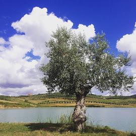 by Arber Shkurti - Novices Only Landscapes