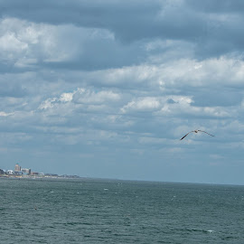 Bird off the Beach by Thomas Shaw - Landscapes Waterscapes ( water, clouds, bird, sand, sky, blue, white, ocean, beach, feathers, sea gull, kure beach, coast, north carolina, city )