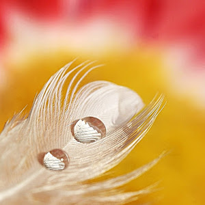 Feather Touch.jpg