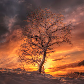 backlight by Rune Askeland - Landscapes Sunsets & Sunrises ( canon, winter, sky, tree, backlight, snow, sunrise )