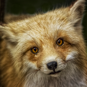 0414-AOM-0615-05-15 by Fred Herring - Animals Other Mammals (  )