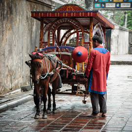 Vietnamese Horsedrawn Carriage by Chantal Reed - Animals Horses ( rider, red conical hat, carriage, hue, horse, vietnam, horsedrawn carriage )