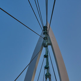 Cables  by Jeff Brown - Buildings & Architecture Bridges & Suspended Structures ( structure, bridges, suspended )