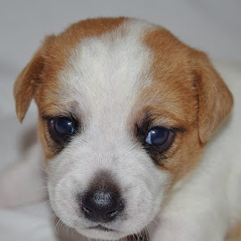 Micky by Donna Paul - Animals - Dogs Puppies