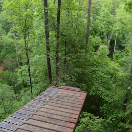 Zip Ramp by Thomas Shaw - Landscapes Forests ( tree, wood, climb works, green, trees, forest, zip linning, woods, smoky mountains, ramp, zip line, climbworks )