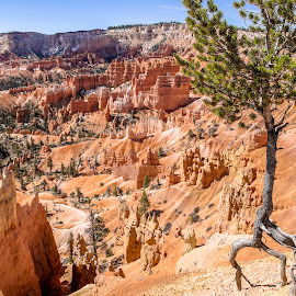 Bryce Canyon Rim #1 by Frank Barnitz - Landscapes Caves & Formations ( national park, tree, formations, sandstone, arid, hot )