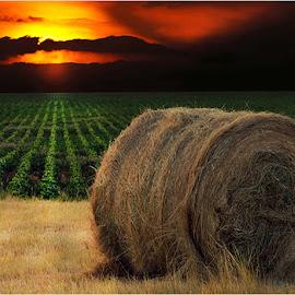 sunset on farm by Leon Pelser - Landscapes Prairies, Meadows & Fields ( no flash, f 6.3, iso 100, tripod, 1/250 sec,  )