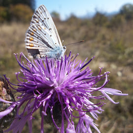 Пеперуда by Georgi Kolev - Animals Insects & Spiders ( пеперуда., ден., светлина., дървета., поляна. )