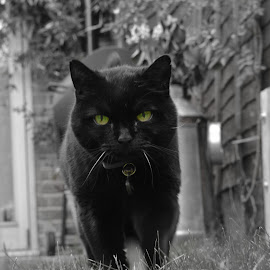 deep by Clive Williams - Animals - Cats Portraits