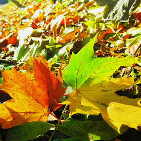 by Tanya Moroza - Nature Up Close Leaves & Grasses ( pwcfallleaves )