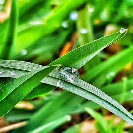 The world in a drop by Andreja Svenšek - Nature Up Close Natural Waterdrops ( water, up close, nature, grass, green, outdoors, outdoor, drops, droplets )