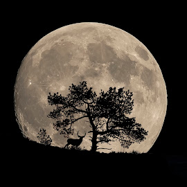 Moon Rise by James Harrison - Digital Art Places