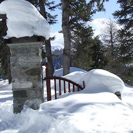Old resort gates by Serguei Ouklonski - Landscapes Travel ( pines, davos, snow, schatzalp, trees, switzerland, resort, gates, graubünden )