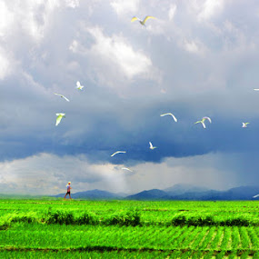 by El Baim as TOMMY AR - Landscapes Prairies, Meadows & Fields ( storks, nature, farmer, tommy, landscape, gorontalo, human )
