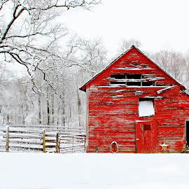 Berryvine Barn Snow by Christy Berry - Buildings & Architecture Decaying & Abandoned ( farm, red, winter, barn, snow, white )