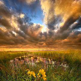 Just Moving Slow by Phil Koch - Landscapes Prairies, Meadows & Fields ( vertical, travel, yellow, love, sky, weather, light, u  nity, trending, colors, twilight, art, mood, journey, horizon, rural, portrait, country, dawn, environment, season, horiz  ons, serene, popular, outdoors, lines, natural, hope, inspirational, canon, wisconsin, ray, joy, sunse  t, landscape, sun, photography, life, emotions, dramatic, horizons, inspired, clouds, office, heaven, camera, beautiful, scenic, living, morning, field, natu  re, blue, peace, meadow, summer, beam, sunrise, earth )