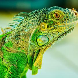 by Joy Advent - Animals Reptiles
