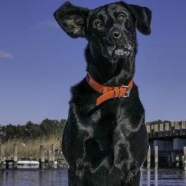 1.8.17 #RiversidesWenona #wetipquincreek #wetipquinpark #wetipquin #tyaskin #tyaskinmd #igmaryland #nanticokeriver #maryland #visitmaryland #wicomicocounty #westside by Ruth Ann Workman - Animals - Dogs Portraits
