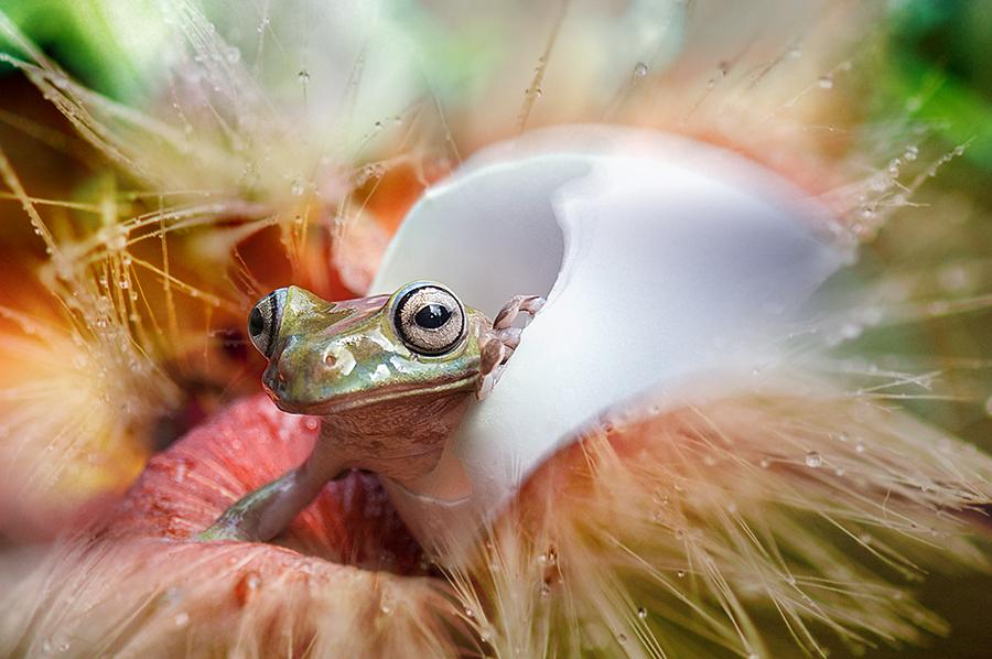 Telur Kodok by Bocah Bocor - Animals Reptiles